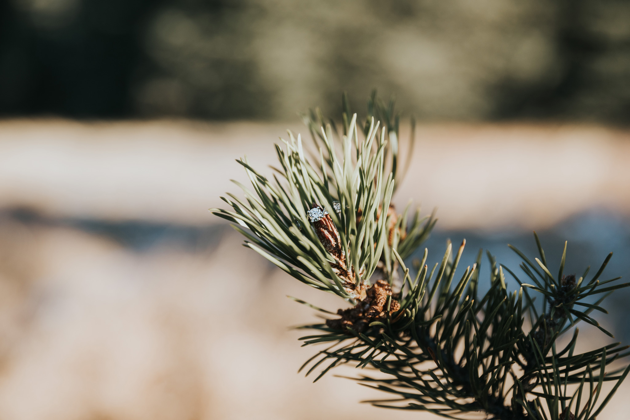 cypress hills engagement ring photo pine tree