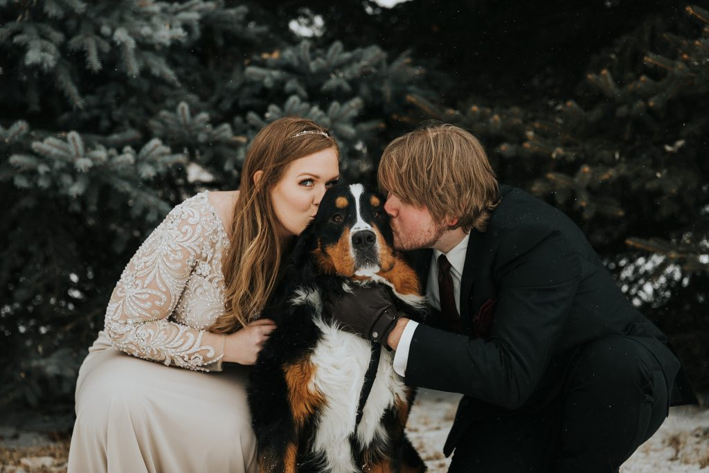 bride and groom kissing pet bernese mountain dog alberta wedding photographer