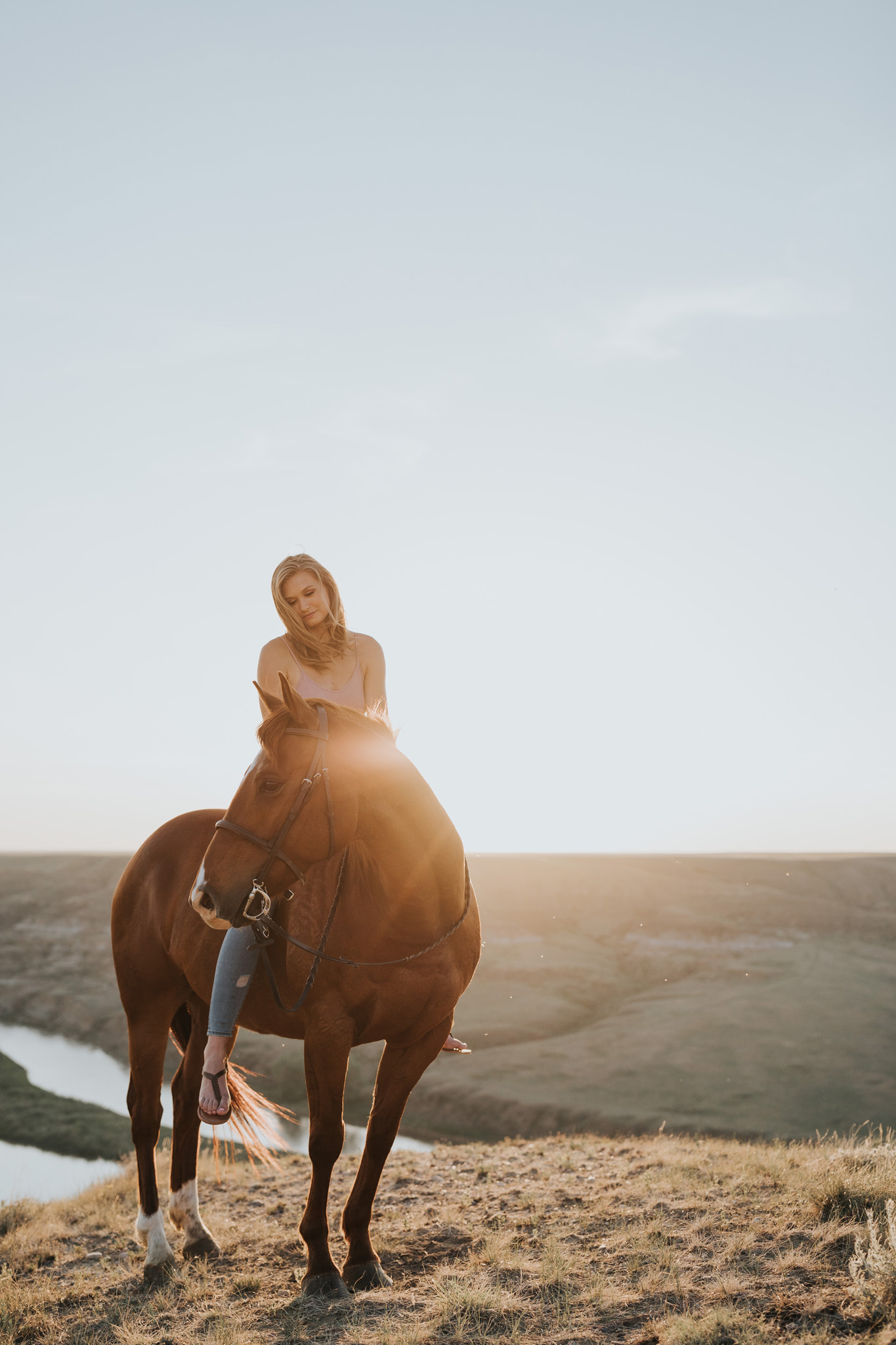 equine photo at alberta coulee sunset