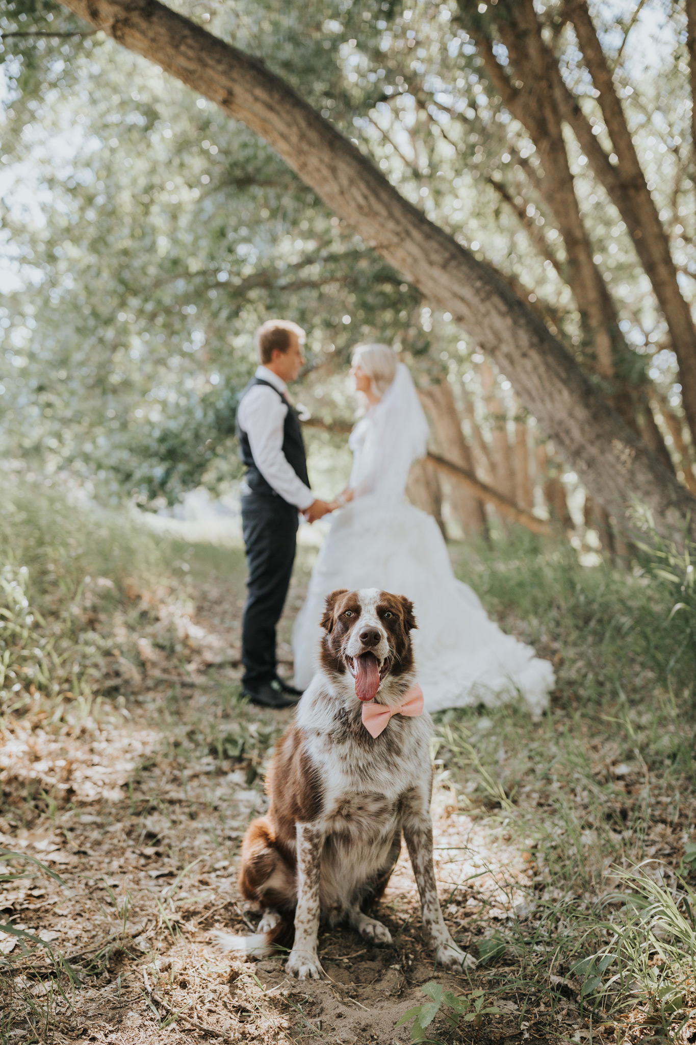 dog wearing bowtie with bride and groom holding hands in the background