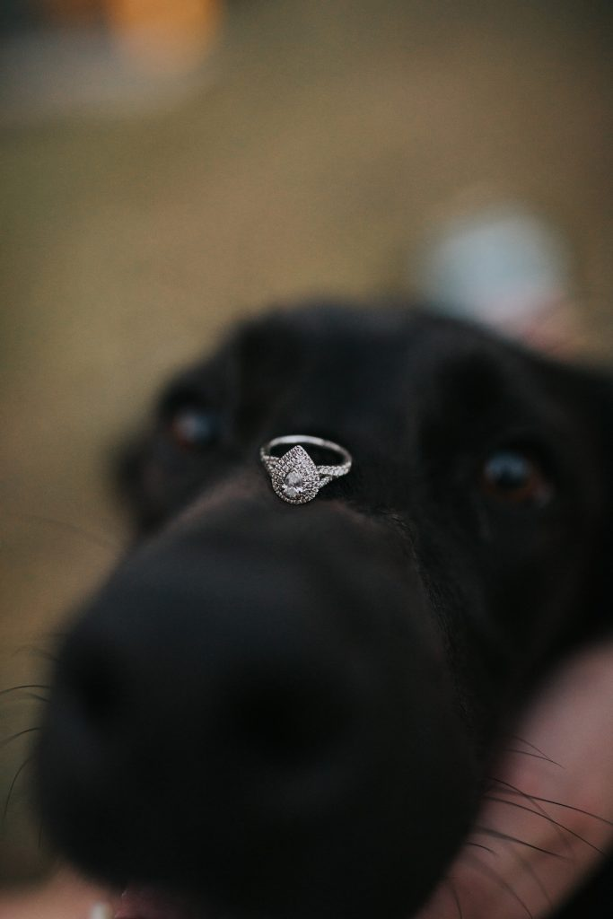 engagement ring sits on dogs nose