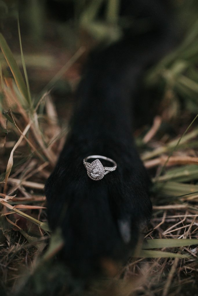 engagement ring sits on dogs paw